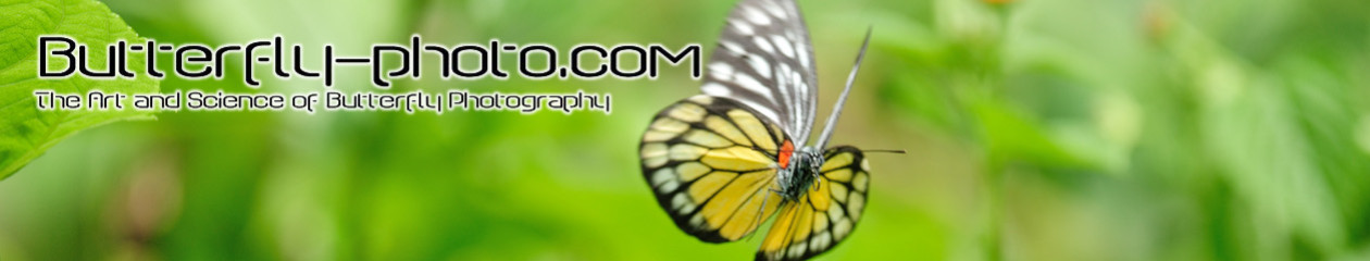 Butterfly-Photo.com